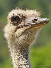 Ostrich eye (EighteenPercentGray) Tags: life wild green nature birds closeup canon zoo outdoor safari t3i ostritch canonef70200mmf40lusm 650d