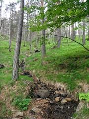 Divčibare 014 (jecadim) Tags: mountain nature forest trekking spring hiking serbia meadow srbija divčibare