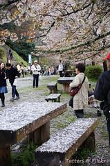 Cherry blossom Picnic table (Tatters ) Tags: people japan bench table petals fallen nara hanami yoshino yoshinoyama
