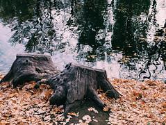 2015-11-10 07.26.46 1 (anastasiya_klenyaeva) Tags: trees sky nature russia autmn     saratov vsco vscocam vscorussia vscosaratov