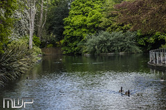 DSC_3073 (mikewarnerphotography) Tags: river grove wandle carshalton mwp
