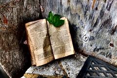 The Bookmark (josephburden58) Tags: stilllife writing leaf pages books fujifilmx10