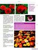 Комнатные и садовые растения от А до Я 2014 33