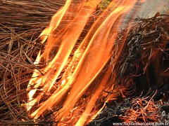 DSCN2493 (moisesbarcellos) Tags: life book power dancing flames books burn firedancing ember fier