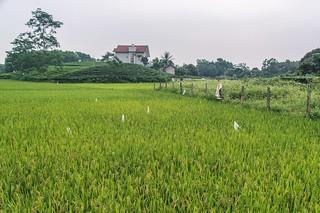 thai nguyen - vietnam 7