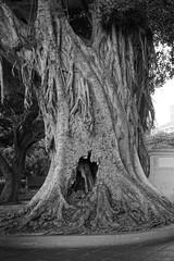Alice will follow (Carlos A. Aviles) Tags: tree arbol hole oldsanjuan puertorico viejosanjuan hueco