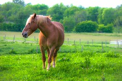 Free Reign (a2roland) Tags: light horse white eye sports nature grass animals hair landscape photography natural wind bokeh spirit picture free norman around diffusion breeze gree flicker zeb reign horsing a2roland a2rolandyahoocom