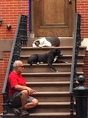 Chilling on a stoop (dannydalypix) Tags: stoop uws dogdayafternoon townhousestoop