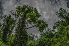 (souravpaul2) Tags: trees india nature clouds dark assam tinsukia northeastindia