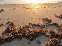 A New Beginning (jwrieden) Tags: wildlife ocean beach turtle seaturtle hatchling baby florida melbournebeach nature outdoor