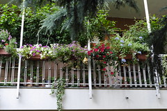 _1280185 un balcone in fiore (spartano2010 - waiting for the white lady) Tags: torino piemonte balcone fiori vasi pendenti surfinie