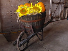 Farm decor (yooperann) Tags: chatham upper peninsula michigan state university north experimental extension farm rural alger county community collaborative dinner fundraiser sunflowers wheelbarrow