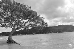 Lagoa da Conceio - Florianpolis/SC (Luciana Parizotto) Tags: santa praia sc gua natureza florianopolis da viagem lagoa catarina rvore conceio