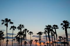 San Diego Palms (sushiigirl) Tags: california san diego