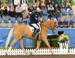 150509_2015_Sydney_YH_Finals_2013.jpg (FranzVenhaus) Tags: sydney australia nsw newsouthwales aus equestrian dressage siec