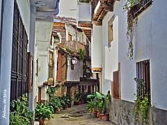 Villanueva de la Vera (Cceres) 04 calle (ferlomu) Tags: planta calle pueblo caceres villanuevadelavera valledelavera ferlomu