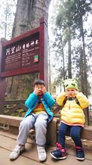 DSC01706 (YUKI Hsu / nlyuki) Tags: chiayi 阿里山 嘉義 sacredtree 神木 阿里山國家風景區 shenmu alishannationalscenicarea 情人果2y2m 可樂果6y3m