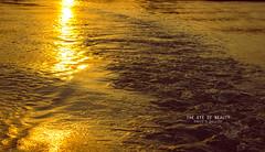 GOLDER WATER (Xahid's Gallery) Tags: sun lake nature water golden bangladesh reflaction savar