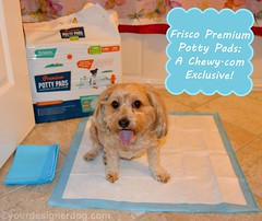 Frisco Premium Potty Pads  #ChewyInfluencer (yourdesignerdog) Tags: dog house smiling tongue training out puppy all wordpress wee posts potty reviews pads ifttt chewycom