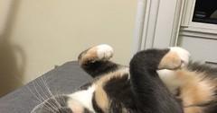 Happy 2nd birthday to my girl Arwen. via http://ift.tt/29KELz0 (dozhub) Tags: cat kitty kitten cute funny aww adorable cats