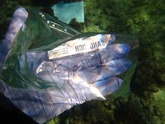 GCMP_sample_photo_2573 (r.mcminds) Tags: xvii cyphastrea scleractinian metazoan needsspeciesid pacificocean australia idbyjoepollock cnidaria gcmp robust anthozoan missingsampleinformation indopacific cyphastreasp sampleidneeded taxonomyuncertain photobyjoepollock lordhoweisland gcmpsample hexacorallian farflats animal cnidarian globalcoralmicrobiomeproject hardcoral merulinidae stonycoral au
