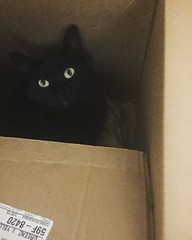 Of course, in between #vacation recap you need kittygrams. Here's #isisthecat chillin in one of her cat traps...I mean, boxes. Those eyes! #meow #catsofinstagram #blackcats #cattrap #ififitsisits (ClevrCat) Tags: ifttt instagram of course between vacation recap you need kittygrams heres isisthecat chillin one her cat trapsi mean boxes those eyes meow catsofinstagram blackcats cattrap ififitsisits