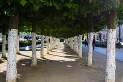 Tree Path (Krastyburger) Tags: brussels gante bruselas blgica belgium belgique turism art arte street photography fotografa city ciudad