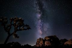 Milky Way at Joshua Tree (APS-Photo) Tags: joshuatree lightpainting milkyway nicghtscapes stars