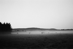 Misty Meadow (Nilsfried) Tags: landschaft meinfilmlab natur silhouette schwarzweis film ilford hp5 plus 400 analog analogue