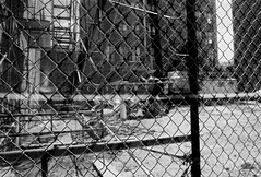 NYC edit 18 (Willliam Grob Photography) Tags: road lighting street leica nyc sky people blackandwhite bw white abstract black contrast america portraits buildings walking subway real happy photography born faces natural rangefinder again buskers unknown organic process society hobo m6 nastalgic day2day leicai familure