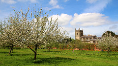 Coughton Court (markphilhall) Tags: church blossom nt orchard nationaltrust warwickshire stpeter coughtoncourt sigma18250 canon100d