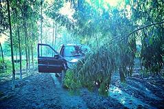 Stop and rest. (Jaswinder Chohan,.) Tags: travel trees light field landscape asia outdoor path tata soil land eucalyptus punjab suv enviroment sufari panjab agroforestry hoshiarpur dhurian