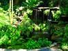 ~Oct 2009 Fairchild Gardens #6~ (endemanf) Tags: ferngrotto miamiflorida fairchildbotanicalgardens tropicalwaterfalls tropicallandscapes tropicaljunglegardens