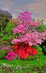 Shrub Stack (jonEf) Tags: usa washington wa flowering tacoma shrub hdr