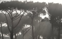 Through the mist (DaLi-A) Tags: morning trees bw sun mist fog nebel pentax sw sonne bume morgen k30 pentaxlife
