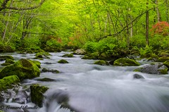 Oirase Gorge Stream, Towada, Aomori Prefecture, Japan (leonardrandle1) Tags: tree water beautiful japan creek river landscape waterfall stream outdoor scenic aomori serene towada oirase  aomoriprefecture oirasegorgestreamtowadaaomoriprefecturejapan