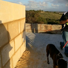 Progress on the western lookout (Figgles1) Tags: dog dogs rosie lookout coogee lookouts iphone img1242