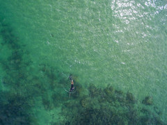 The Spearfisherman (Corey Hamilton) Tags: au australia newsouthwales moonee