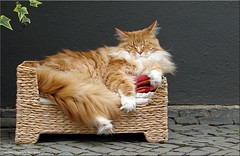 Lieblingssofa - favourite sofa