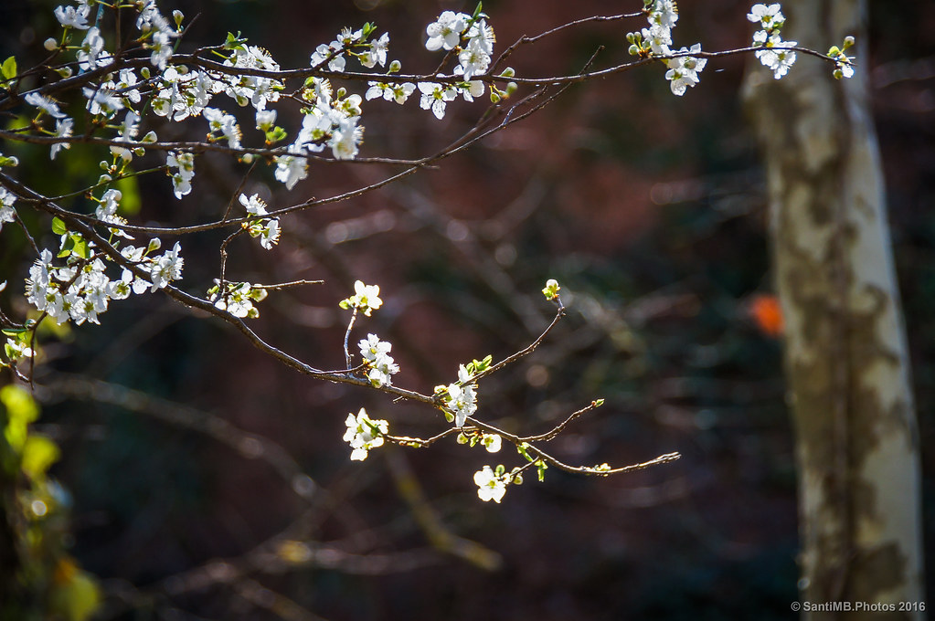 Luces de primavera