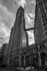 Wide Angle Black and White. (JH Photography (Bokeh Boyz)) Tags: street nikon photography photo pics pictures beautiful birds element sun clouds cityscape buildings beauty wow amazing downtown chicago 2016 new now photoshoot shoot downtownchicago april may summer spring season keep heat dope instagram life wide wideangle wideanglelens nikonshooter