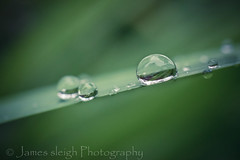 Nikon d5300 macro (Jasrmcf) Tags: blur macro reflection nature grass rain droplets nikon dof bokeh smooth 40mm nikkor nikonmacro bokehlicious bokehgraph