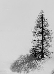 Time-1 (ici_lolo) Tags: snow alone time ombre 900 sapin tannenbaum treetavoir avoirettre saintverran noiretblancsapin