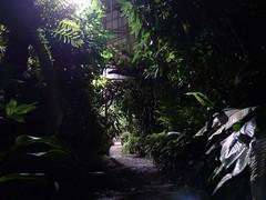 Botanical Garden at night (arborist.ch) Tags: tree baum treeclimbing arborist treecare baumpflege arboriculture