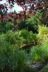 DSC_0976-1 (Chaumurky) Tags: h garden