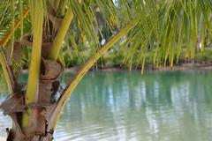 Erakor Lagoon, Vanuatu (melizzajane) Tags: holiday nikon lagoon palm resort palmtrees southpacific holidayinn vanuatu pacificislands portvila d5300 erakorlagoon