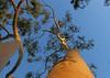 Franceschi Park Trees (Debbie Ashcraft) Tags: beginnerdigitalphotographychallengewinner franceschipark santabarbara california usa