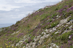 wildflowers and shale (Wendy:) Tags: howth summit views landscape hill slope horizon dof
