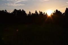 Sunrise - Sonnenaufgang (Lala89_Photos) Tags: schwarzwald blackforest black forest sunrise sonnenaufgang silhouette