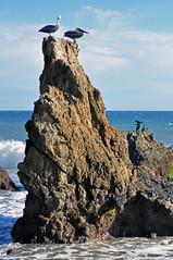 El Matador State Beach (Anosmia) Tags: malibu california elmatadorstatebeach pelicans seabirds pacificocean
